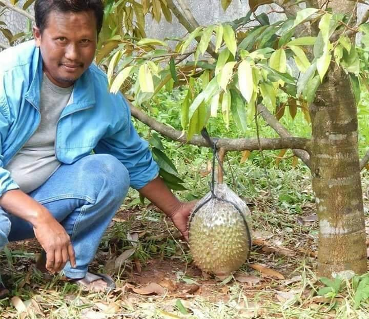 Plant Durian in Retirement